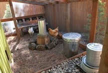 Backyard Chickens / by Mimi Lisa