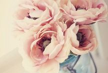 Flowers & Co / by Erika Cartabia
