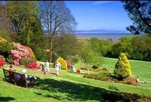 Clyne Gardens / A beautiful park in the heart of Swansea. Council owned and run. Particularly wonderful to visit in Spring for the spring flowers, rhododendrons and azeleas but great any time.