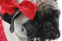 Pug Love ❤ / by Stardust