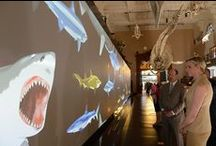 Shark's Exhibition