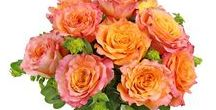 Roses / June is National Rose Month! And we LOVE roses year-round, so here's a collection of rose-related things to enjoy.