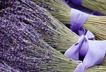 Lovely Lavender / by Wayfaring Stranger