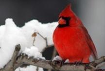 For the Birds / by Wayfaring Stranger