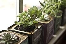 Gardening: Indoor / by Wayfaring Stranger