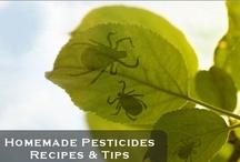 Gardening: Pests, Diseases & Problems / by Wayfaring Stranger