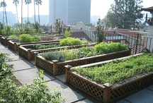 Gardening: Raised Bed and Square Foot  / by Wayfaring Stranger