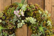 Good To Grow / Gardening tips, ideas, and DIYs for inside and out, home and workplace. For the seasoned green thumb who can grow anything, and the novice learning to care for ivy and air plants.
