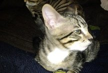 ANIMALS & MY HOUSE PETS