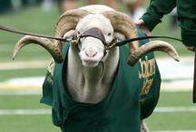 Go Rams! / Prepping for the CSU football season / by Mila G