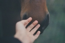 Like an Oasis / being with the horses. / by Priscila C.