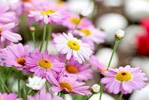 FLOWERS & PLANTS | FLORES Y PLANTAS