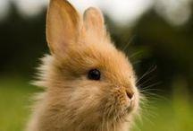 bunny bunny bunny / by Janie Thomas