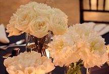 flowers/plants/gardens / by Romy