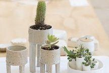 .ceramic. plant .