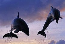 Cetaceans / In other words, dolphins, whales and porpoises.  Amazing, intelligent creatures.