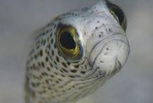 Eels / Moray, congers and their friends.