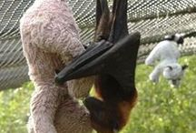 Bats (sky puppies) / Cute pictures of some very misunderstood creatures