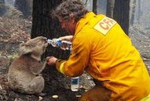 Animals True heroes / Brave animals that save humans, and some humans who save animals - there is hope for this world