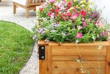 Fresh Flowers / Fresh flowers for your home. And also cut flower garden inspiration.