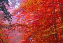 Colors of Fall / Beautiful colors of Fall, Autumn