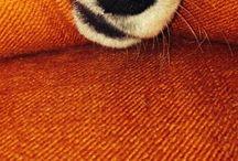 Animals, beloved animals / I love animals!