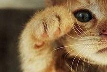 My Kitties <3