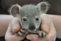 cute // eeeeeee!