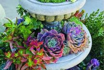 Succulents Obsession!! / by Susan Lewis