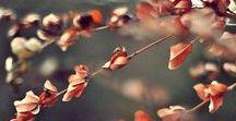 Autumn Romance// FW16