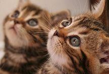 love me love my kittens / by Erin Uyeshima