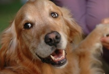 goldens & friends / Unconditional Love / by Janice Treadwell