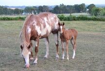 Equinitus--Horse Crazy!