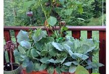 Vegetables and Fruits in Containers and Patio Pots / Inspirations for adding Veggies with other plants in Container Gardens. Will be speaking on this topic in May and June 2014.  If interested and local, see my blog at Container Crazy Cathy T at ContainerCrazyCT.com.  #vegetablesinpots