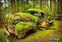 Abandoned Vehicles / ...there's a certain charm to the rust and disrepair. / by Cynthia McClellan