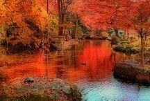 Autumn: Seasonal Scenes, Thanksgiving, Decor / My favorite season! / by Cynthia McClellan