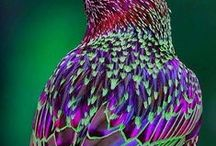 Awesome Beauty / Pictures I find exceptionally beautiful. / by Cynthia McClellan