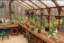Wish I had a greenhouse