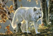Vlci a jiná psiska
