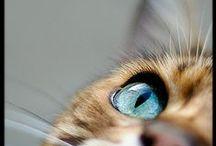 Animals {beloved}{precious}