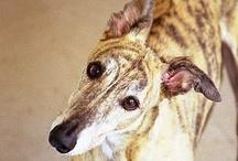 Hound Dog :)