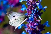 Butterflies {{i}} Birds / by Karen Boisselle Resinski