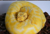 CAKE Creations / by Karen Boisselle Resinski