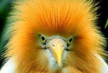 Winged Wonders / Love exotic birds / by Chris Fagin