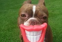 funny animal / animals are hilarious / by Zety Asc