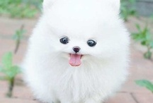 Kill 'em with cuteness / Things guaranteed to put a smile on your face.