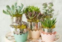 Darling Succulents