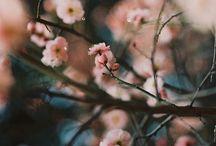 | fleur |
