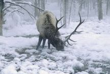 Land & Sky Creatures / Magnificent earthly creatures.