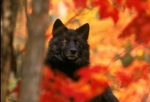 Wolf / by Lisa Marie Rosati